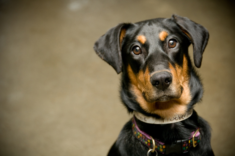 How Do Cats Automatically Know To Use The Litter Box